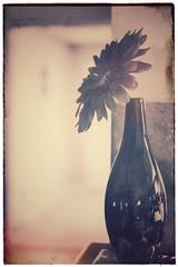 Burned (mteter73@att.net) Tags: mystery simple vase nature sepia monochrome blackandwhite stilllife flower