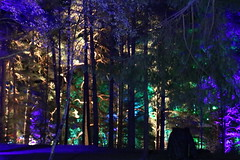 2019 - 3.10.19 Enchanted Forest Pitlochry (201) (WeeMarie1121) Tags: lights water show forest trees food visitors pitlochry enchanted cosmos theme people art stars solar marie137 colourful colour bright music sound fire imagination beautiful stunning scotland