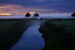 DSC01326 (Argstatter) Tags: landschaft landscape abendstimmung niederblockland nebel natur bremen