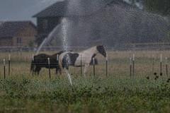 Horse Wash!   ....HFF! (jackalope22) Tags: hff horse fence water spray wash misty