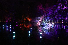 2019 - 3.10.19 Enchanted Forest Pitlochry (181) (WeeMarie1121) Tags: lights water show forest trees food visitors pitlochry enchanted cosmos theme people art stars solar marie137 colourful colour bright music sound fire imagination beautiful stunning scotland