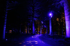 2019 - 3.10.19 Enchanted Forest Pitlochry (200) (WeeMarie1121) Tags: lights water show forest trees food visitors pitlochry enchanted cosmos theme people art stars solar marie137 colourful colour bright music sound fire imagination beautiful stunning scotland