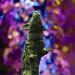 Colour Sculpture Park / Churt