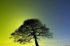 Prominence (Tony Tooth) Tags: nikon d7100 sigma 1020mm tree silhouette surreal surrealsky prominence grindon staffs staffordshire