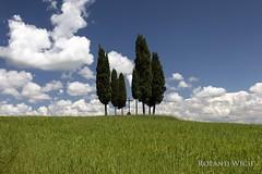 Toscana (Rolandito.) Tags: europe europa italy italia italien italie toscana val dorcia cipressi cypress group san quirico