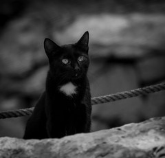 Isolation (Stu Thatcher) Tags: cat blackandwhite bw mono canon 7d mk2 stu stuart thatcher outdoor outside