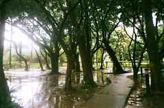 Raining. (蒼白的路易斯) Tags: film canonprima 底片攝影 底片