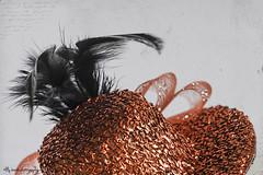 #Headwear (aenee) Tags: aenee nikond7100 sigma105mm128dgmacrohsm headwear lookingcloseonfriday tocados hoofddeksel feathers veren haarspeld macro red rood rouge festive feestelijk texture pse14 20191004 dsc4157