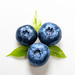 Blueberries with leaves and drops of water. The view from the top