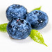 Three blueberries with leaves close-up