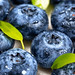 Blueberry berries with water drops, fruit background