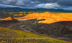 Painted Hills, John Day Fossil Beds - Oregon (~ Floydian ~) Tags: henkmeijer photography floydian johndayfossilbeds paintedhills oregon northwest springtime wildflowers sunset evening leefilters american landscapes landscape canon canontse24mmf35lii tiltshift tiltshiftlens canon5dmarkiv