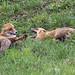 Fox's argument