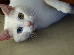 Where's my mouse (AndreaMSmithPortugal) Tags: animals cats pets predators portraits