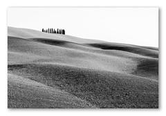 up and down (ddaugenblick) Tags: oskana tuscany val dorcia zypressenkreis sw bw