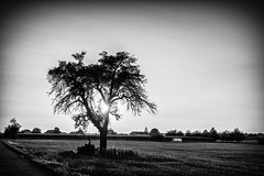 Two Months ago... (Ody on the mount) Tags: bäume canon g7xii gegenlicht hdr himmel landschaft pflanzen powershot sonne sonnenuntergang bw blackandwhite landscape monochrome sw schwarzweis sun sunset tree