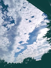 Cracking clouds. (daveandlyn1) Tags: sky somebluesky clouds upabove trees patterns pralx1 p8lite2017 huaweip8 smartphone psdigitalcamera cameraphone