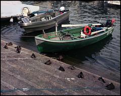 Rolleis Lake Como Experience 2019 (810) (Hans Kerensky) Tags: rolleiflex 35c 6x6 tlr fujifilm pro 160ns scanner plustek opticfilm 120 menaggio lake como italy 2019 harbor ducks sleep