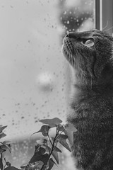 Autumn rain. (Dans ma nébuleuse) Tags: home cat eyes chat chatte oeil lumiere pluie rain automne autumn window bokeh light family famille 50mm canon 100d ef50 18stm animal