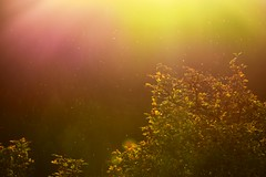 An Afternoon In Fantasia (Robin Shepperson) Tags: sunset fantasy light colours nature shierke germany insects bokeh colour pink yellow orange green life evening afternoon beautiful d3400 nikon nikkor vr1 deutschland holiday seasons autumn outside tree leaves art gaia sun trees garden