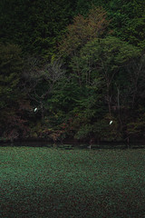 PhoTones Works #11940 (TAKUMA KIMURA) Tags: photones ricoh pentax k1mark2 takuma kimura 木村琢磨 木村 琢磨 風景 景色 自然 landscape nature snap 鳥 bird birds 池 lake 木 tree