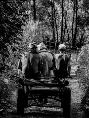 Stay (dreezyr) Tags: countryside villager village father son fatherandson horsedrawn carriage goinghome peace