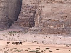 Caravana de camellos, Desierto de Wadi Rum, Jordania (Edgardo W. Olivera) Tags: panasonic lumix gh3 edgardoolivera microfourthirds jordania jordan microcuatrotercios mediooriente orientepróximo middleeast wadirum uadirum desierto desert camello camel beduino roca rock montaña mountain