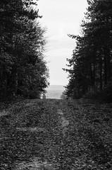 L'allée... (DavidB1977) Tags: france picardie hautsdefrance aisne craonne chemindesdames allée wwi monochrome film argentique canon tlb bw nb arbres