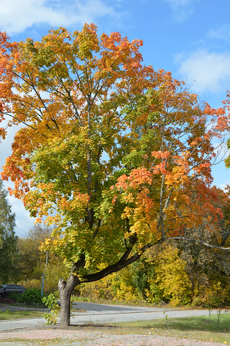 Tree near Pripyat, Ukraine