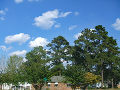 Beautiful Day In Our Neighborhood. (dccradio) Tags: lumberton nc northcarolina robesoncounty outside outdoor outdoors nature natural october friday fridayafternoon afternoon goodafternoon autumn fall fuji finepix a500 sky bluesky clouds tree trees branch branches treebranch treebranches treelimb treelimbs foliage greenery leaf leaves landscape