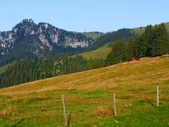 Brüüscht Diemtigen: Blick Richtung Puntelgable 1949m (Martinus VI) Tags: tags hinzufügen diemtigtal diemtigen zwischenflüh august y190831 wanderung bergwanderung keymahi0068 kanton de canton bern berne berna berner bernese schweiz suisse suiza switzerland svizzera swiss martinus6 martinus6xy martinus vi hillside