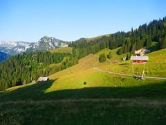Brüüscht Zwischenflüh Diemtigen (Diemtigtal) (Martinus VI) Tags: tags hinzufügen diemtigtal diemtigen zwischenflüh august y190831 wanderung bergwanderung keymahi0068 kanton de canton bern berne berna berner bernese schweiz suisse suiza switzerland svizzera swiss martinus6 martinus6xy martinus vi hillside