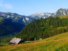 Brüüscht Zwischenflüh Diemtigen (Diemtigtal): Meniggrund (Tal des Menigbachs oder Narenbach) (Martinus VI) Tags: tags hinzufügen diemtigtal diemtigen zwischenflüh august y190831 wanderung bergwanderung keymahi0068 kanton de canton bern berne berna berner bernese schweiz suisse suiza switzerland svizzera swiss martinus6 martinus6xy martinus vi hillside