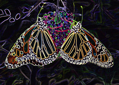 In a World of Their Own (kfocean01) Tags: photomanipulation insect butterflies butterfly filter photoshop glowingedges art creative designs patterns flowers nature creativephotography