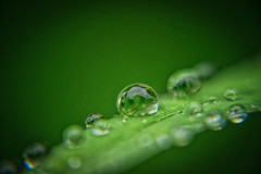 Another rain, another droplet ... (@magda627) Tags: plant light day macro green rain droplets drop