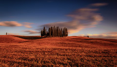 A group of cypress trees (gregor158) Tags: landscape italy italien tuscany clouds sunset trees cypress hills travel unesco places