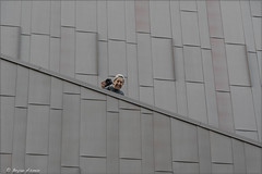 @ HollyWood Walk Of Fame Star BLVD (Geometry Pattern) (bryanasmar) Tags: sony a7r3 24240mm oss kourosh fellow photographer fotowalk hollywood walk of fame star blvd geometry pattern ngs ngg ngw ngww ngc fe24240