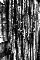 wood_Hi-Conrtrast B&W (Torquemada1965) Tags: wood parking preselectcom peugot mini mclaren karl ludwig bmw z4 mottoguzzi ferrari honda cb750 alfaromeo 8c westkapelle dike diggerworker