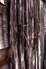 wood (Torquemada1965) Tags: wood parking preselectcom peugot mini mclaren karl ludwig bmw z4 mottoguzzi ferrari honda cb750 alfaromeo 8c westkapelle dike diggerworker