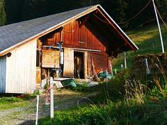 Brüüscht Zwischenflüh Diemtigen (Diemtigtal) (Martinus VI) Tags: tags hinzufügen diemtigtal diemtigen de august bern berne berner canton bernese berna wanderung kanton bergwanderung zwischenflüh y190831 keymahi0068 schweiz switzerland suisse suiza swiss hillside svizzera vi martinus martinus6 martinus6xy
