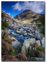 Distant Tryfan (jeremy willcocks) Tags: distanttryfan ogwenvalley northwales ukjeremywillcocks©2019fujixt3xf1024nisilcpl landscape colour heather moutain clouds sky stream river rocks hills scene view portrait wwwsouthwestscenesmeuk jeremywillcocks nationalpark snowdonia