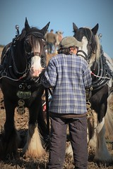 For the Love of Horses (Henry Hemming) Tags: ploughing match mayfield horsedrawn horses horse plough field autumn