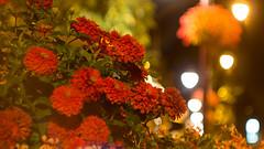 Payrac en fleur - Avenue de Toulouse (Cyril Ribault) Tags: helios 44k4 pentax kr manuel manualfocus prime soviet russian bokeh 55mm payrac 46 lot occitanie france pentaxart