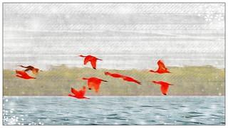 Revoada dos Guaras - Flock of Scarlet Ibis