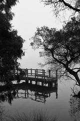 Morning Jetty (Stueyman) Tags: sony alpha a7 a7ii wa westernaustralia au australia bullcreek canningriver river water fog mist blackandwhite noiretblanc bw zeiss batis batis240cf 40mm outside availablelight