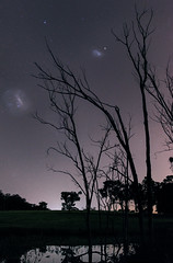 Magellanic Clouds at Bailup, Western Australia (inefekt69) Tags: large magellanic cloud panorama stitched mosaic southern hemisphere cosmos western australia dslr long exposure night photography nikon stars astronomy space galaxy astrophotography outdoor ancient sky 35mm d5500 landscape tracked ioptron skytracker star tracking dead trees lake water light pollution bailup