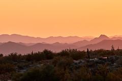 10042019000026128 (Verde River) Tags: gambelsquail cactus nature sunset landscape landscapes rabbit reptile