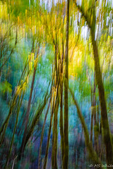 Nature's art in Autumn. (Picture-Perfect Pixels) Tags: nature abstract creative intentionalcameramovement lush greens spiritual majestic todinlet gowllandtodprovincialpark walkingtrail trail pacificnorthwest artistic artsy blur britishcolumbia icm vancouverisland forest woodland