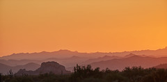 10042019000026113 (Verde River) Tags: gambelsquail cactus nature sunset landscape landscapes rabbit reptile