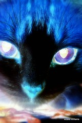 Hallowe'en Abstract - X Ray Cat by iezalel williams IMG_0797-002 (iezalel7williams) Tags: xray blue light pet white black love closeup cat high feline energy colorful expression lovely effect canoneos700d abstract animal photography nice thankyou vibration electricblue happylife thinkpositive pink orange yellow beige purple halloween wow crazy eerie spooky stange ghostly weird uncanny mysterious scary creepy amazing creative unearthly